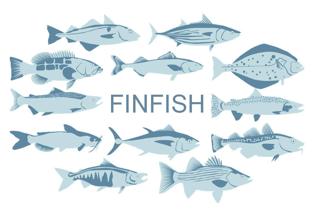 Finfish Sustainable Seafood Buying Guide