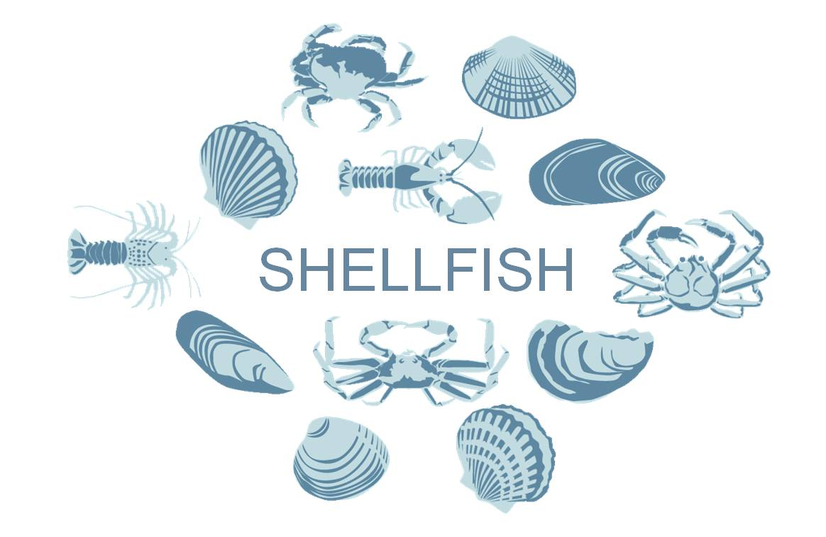 Shellfish Sustainable Seafood Buying Guide