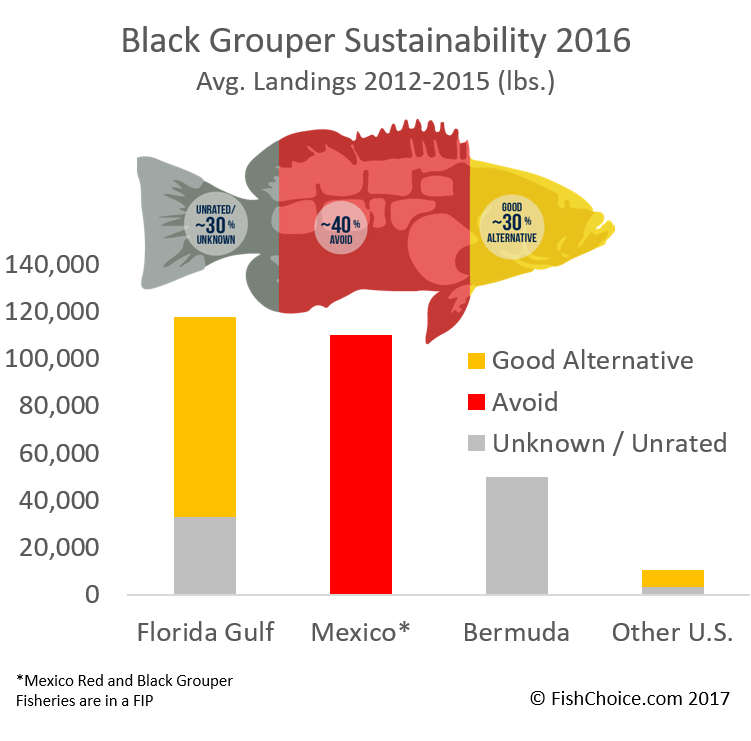 Black Grouper Sustainability