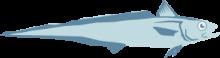 New Zealand Hoki