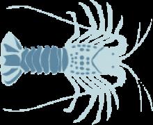 Spiny Lobster (California)